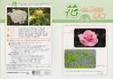 5-6の花−2.jpg